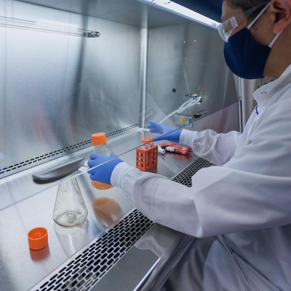 Cell line development scientist at lab hood